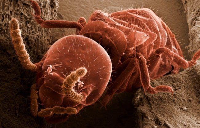 como es una termita
