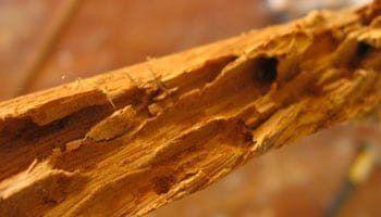 madera roida por termitas