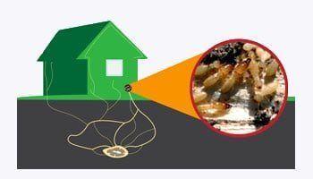 nido de termitas en casa