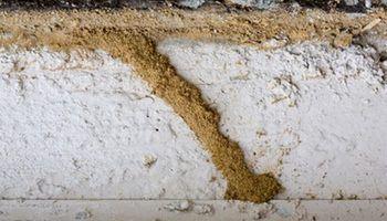 tuneles-termitas