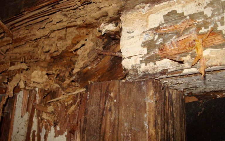 tratamiento para termitas