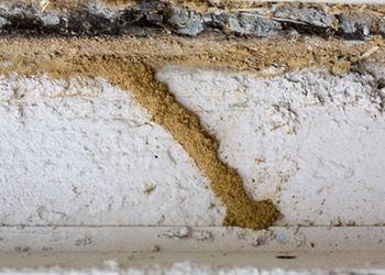 Como Acabar Con Las Termitas En La Pared Como Eliminar Las Termitas Forma Natural Vs Tratamiento Con Cebos
